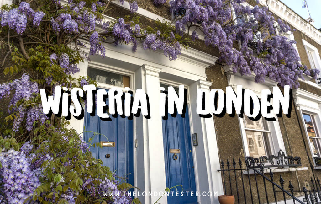Beste Plekken om Wisteria in Londen te Zien: Notting Hill, Kensington & Chelsea || The London Tester